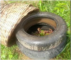 method of rearing snails