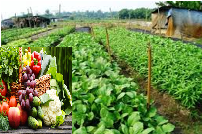 Vegetable farm with different Kinds of Vegetables